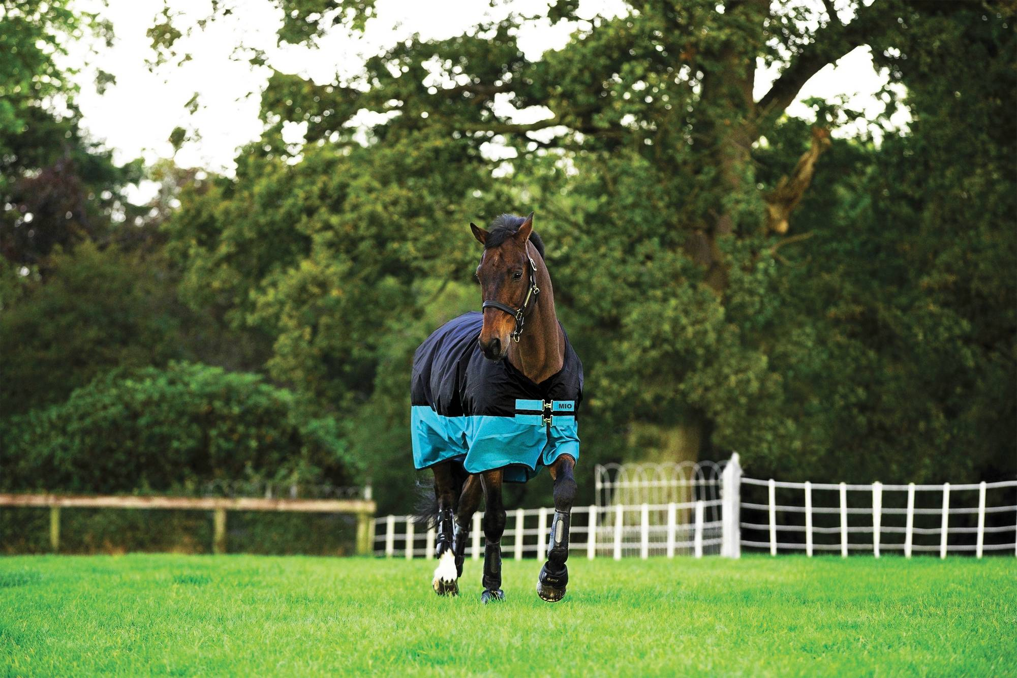 Amigo Mio Turnout Blanket - Lightweight
