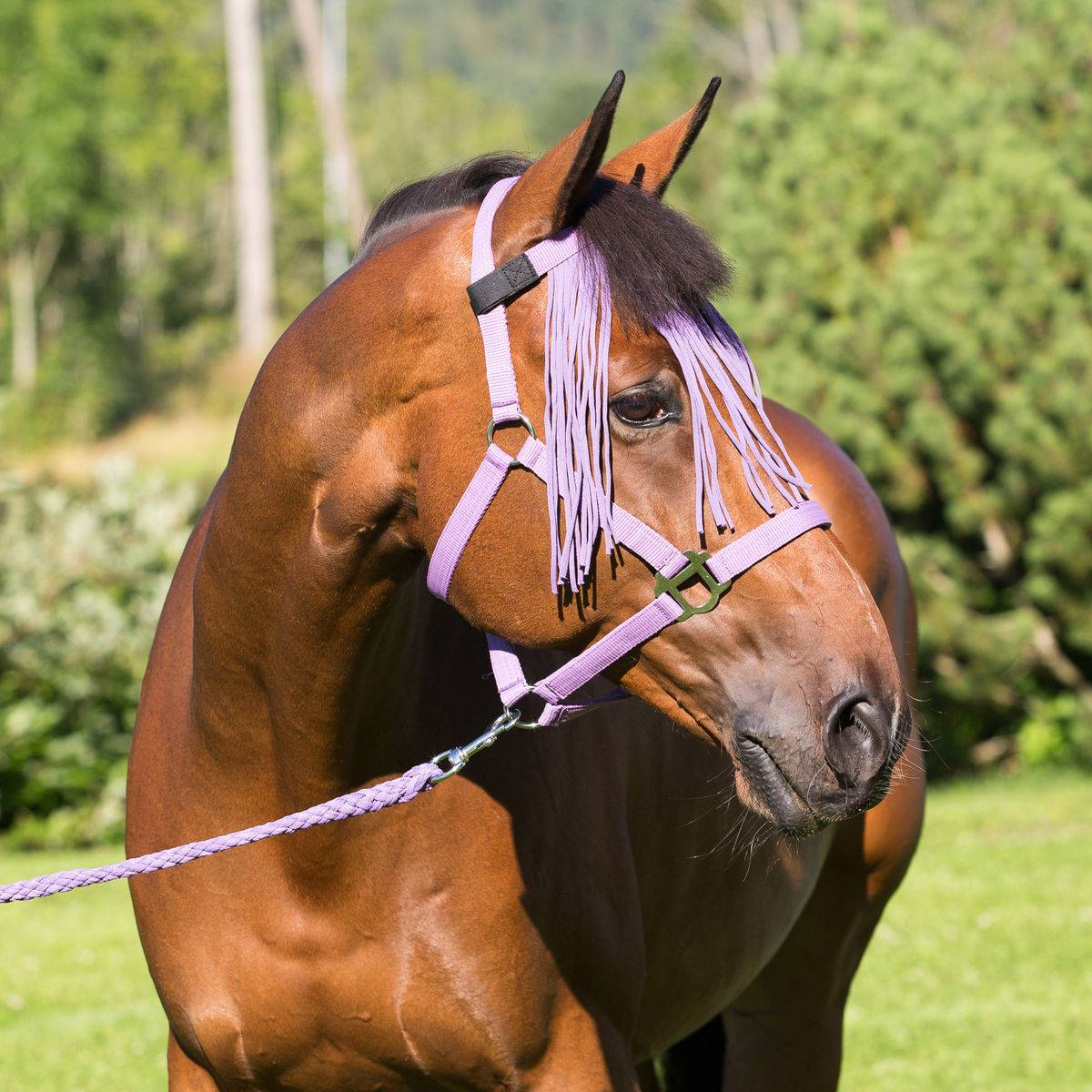 Horze DoMiniaturec Halter, Lead & Flyveil Set