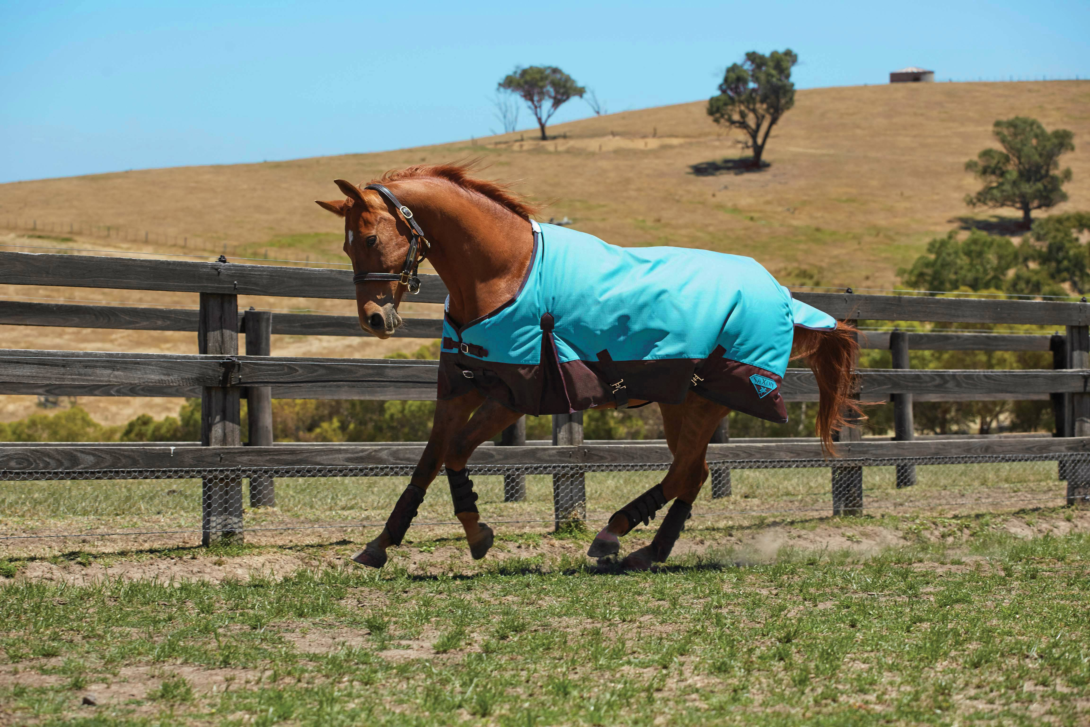 Saxon 1200D Standard Neck Lite Turnout Blanket With Gusset ll