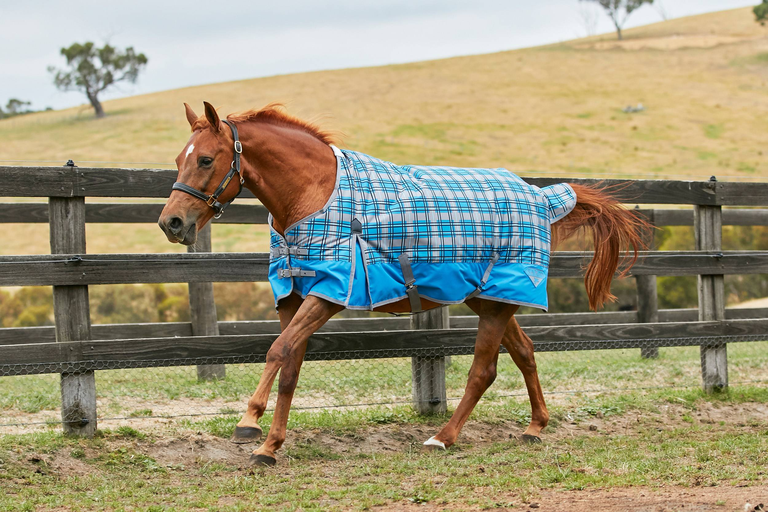 Saxon 600D Standard Neck Lite Turnout Blanket With Gusset ll