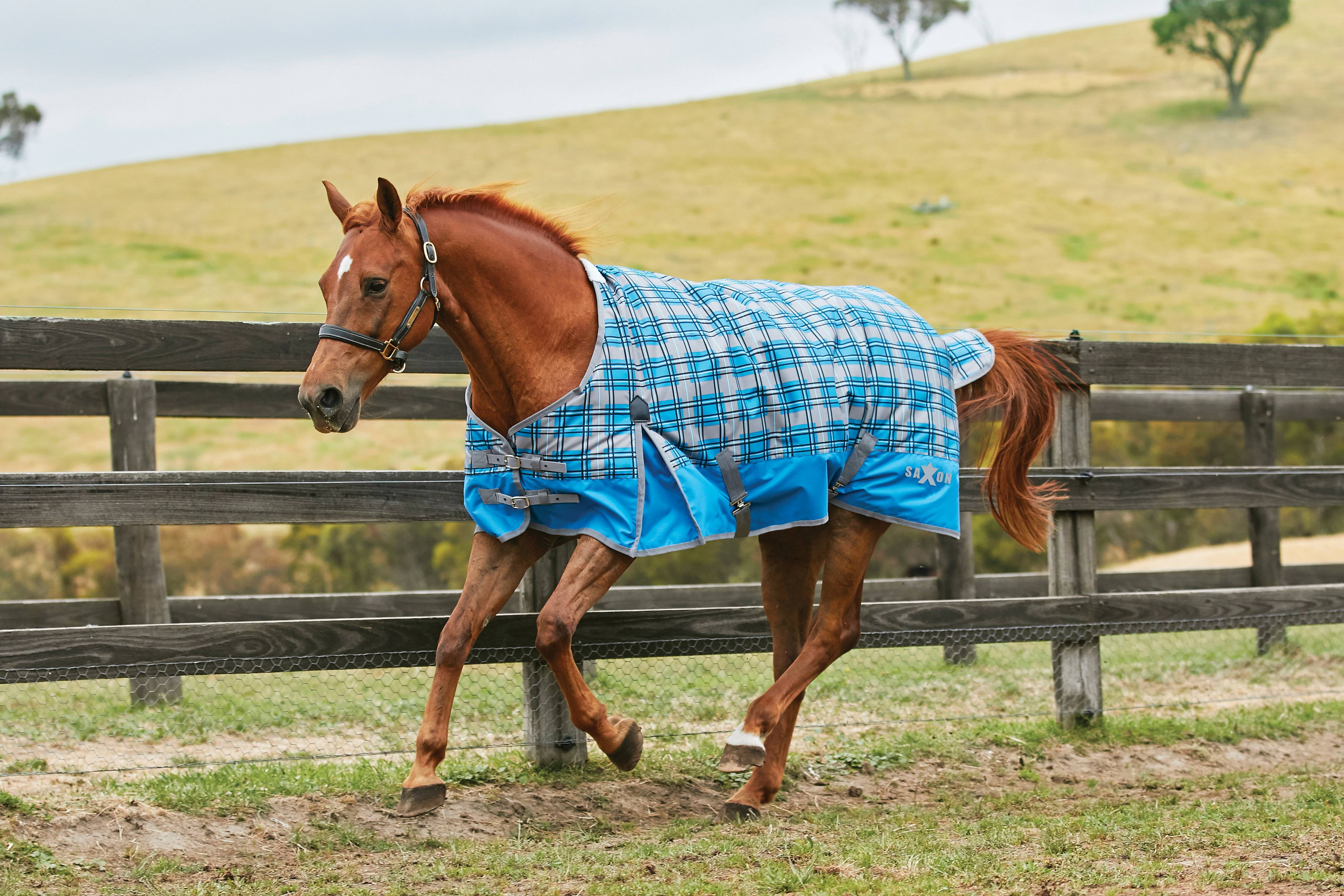 Saxon 600D Standard Neck Medium Turnout Blanket With Gusset ll