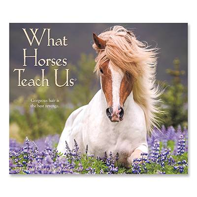 What Horses Teach Us 2017 Daily Box 12 Month Calendar