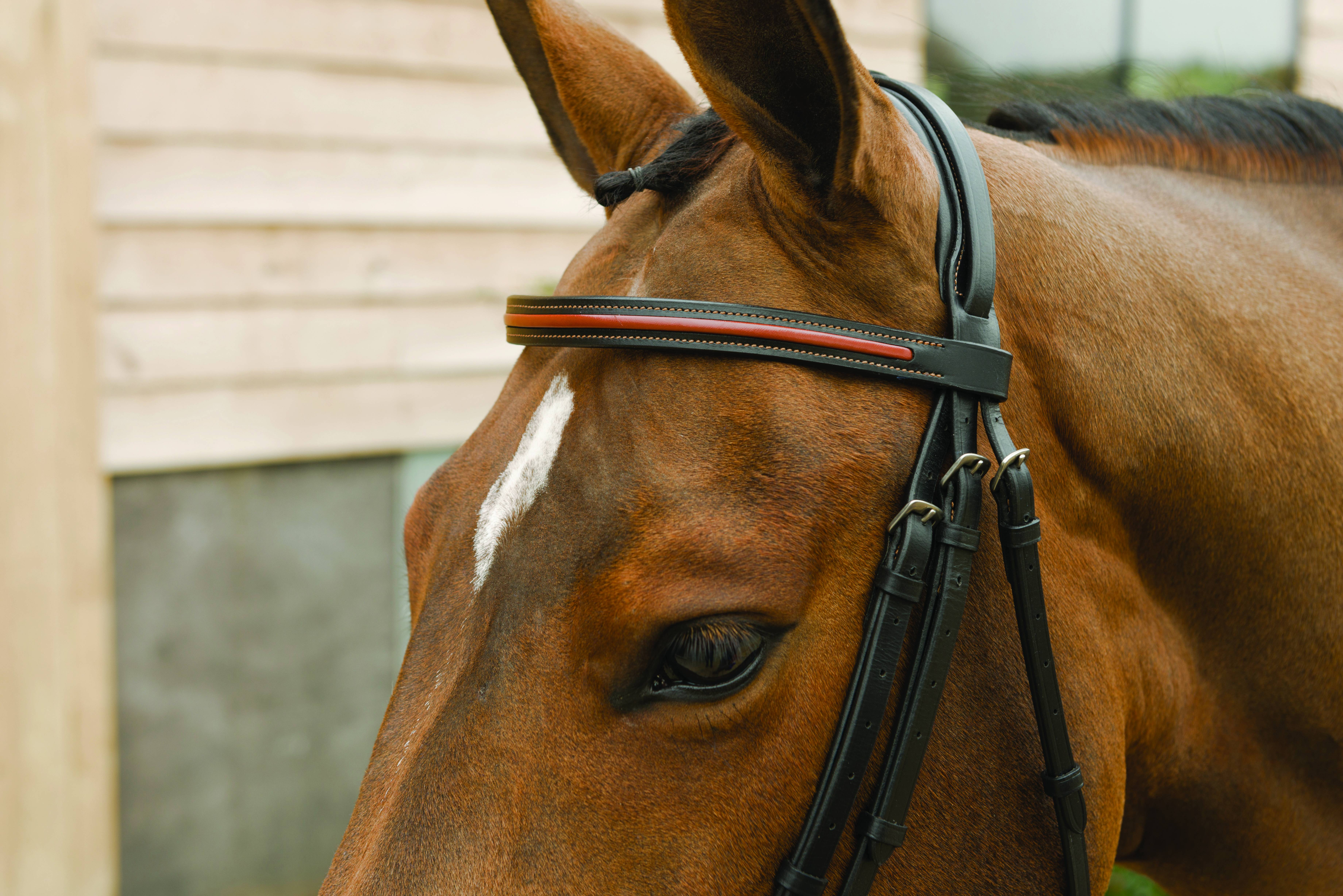 Lami-Cell Two Tone Flash Noseband Bridle