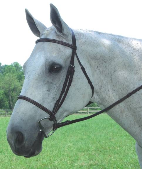 COLLEGIATE Fancy Raised Bridle with Reins