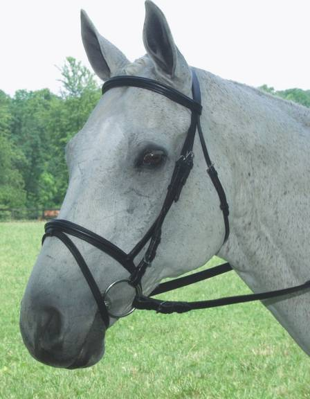COLLEGIATE Padded Flash Bridle