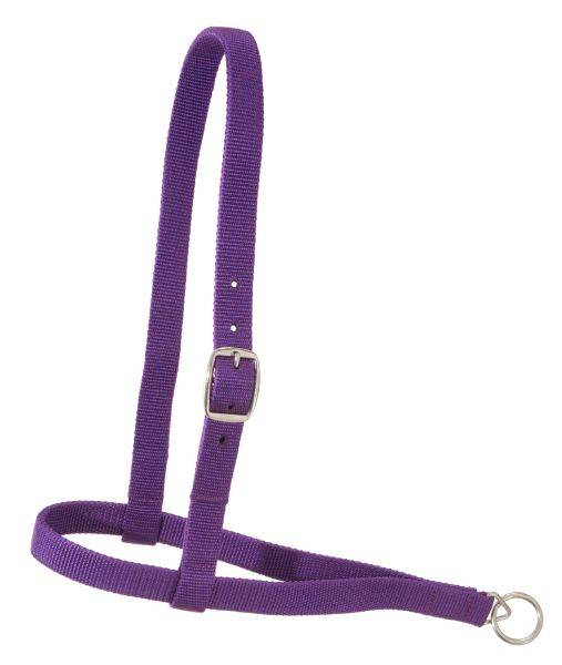 Royal King Nylon Web Noseband