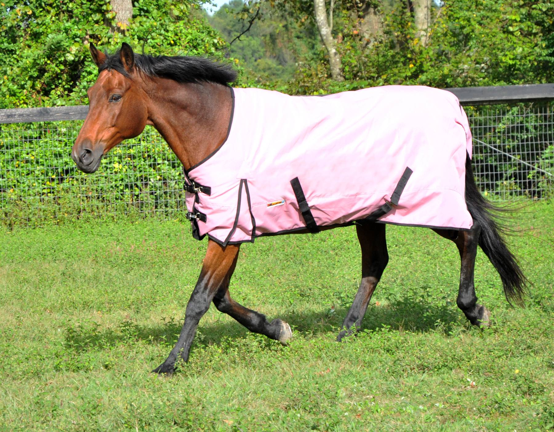 McAlister 600D Diamond Ripstop Waterproof MW Turnout Blanket