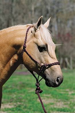 Lami Cell Mountain Rope Halter