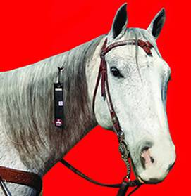 Fly Armor Mane & Tail Band with 2 Pads