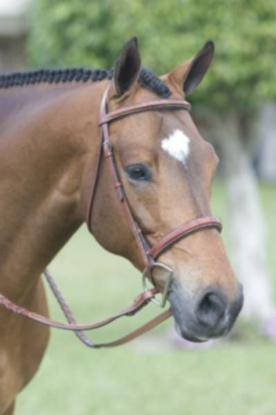 Rodrigo Pessoa Fancy Stitched Padded Wide Noseband Show Bridle