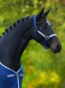Rambo Grand Prix Headcollar