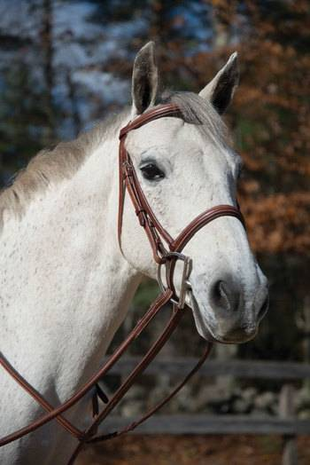 Boston Bridle