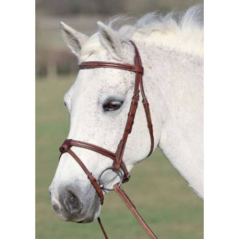 Washington Bridle