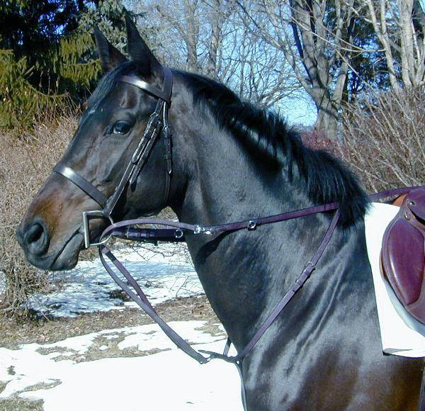 ProAm German Martingale with Leather Reins