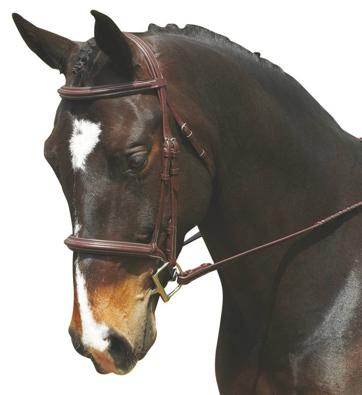 Collegiate Comfort Crown Plain Raised Padded Bridle