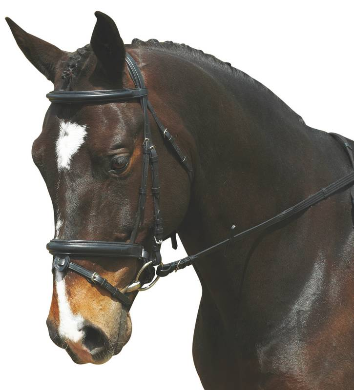 Collegiate Comfort Crown Padded Crank With Removable Flash Bridle