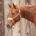 Classic Equine Braided Rope Halter Wide Nose with  Lead