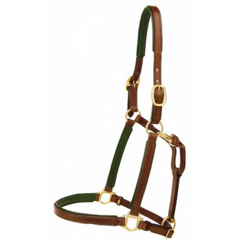 "TORY LEATHER 3/4"" Padded Halter with Brass Hardware"