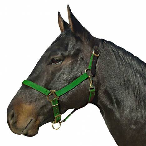 Leather Crown Breakaway Weanling Halter