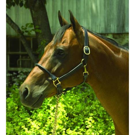 Perri's Rolled Nose 1'' Leather Halter