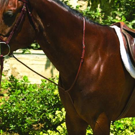 Perri's Raised Standing Martingale
