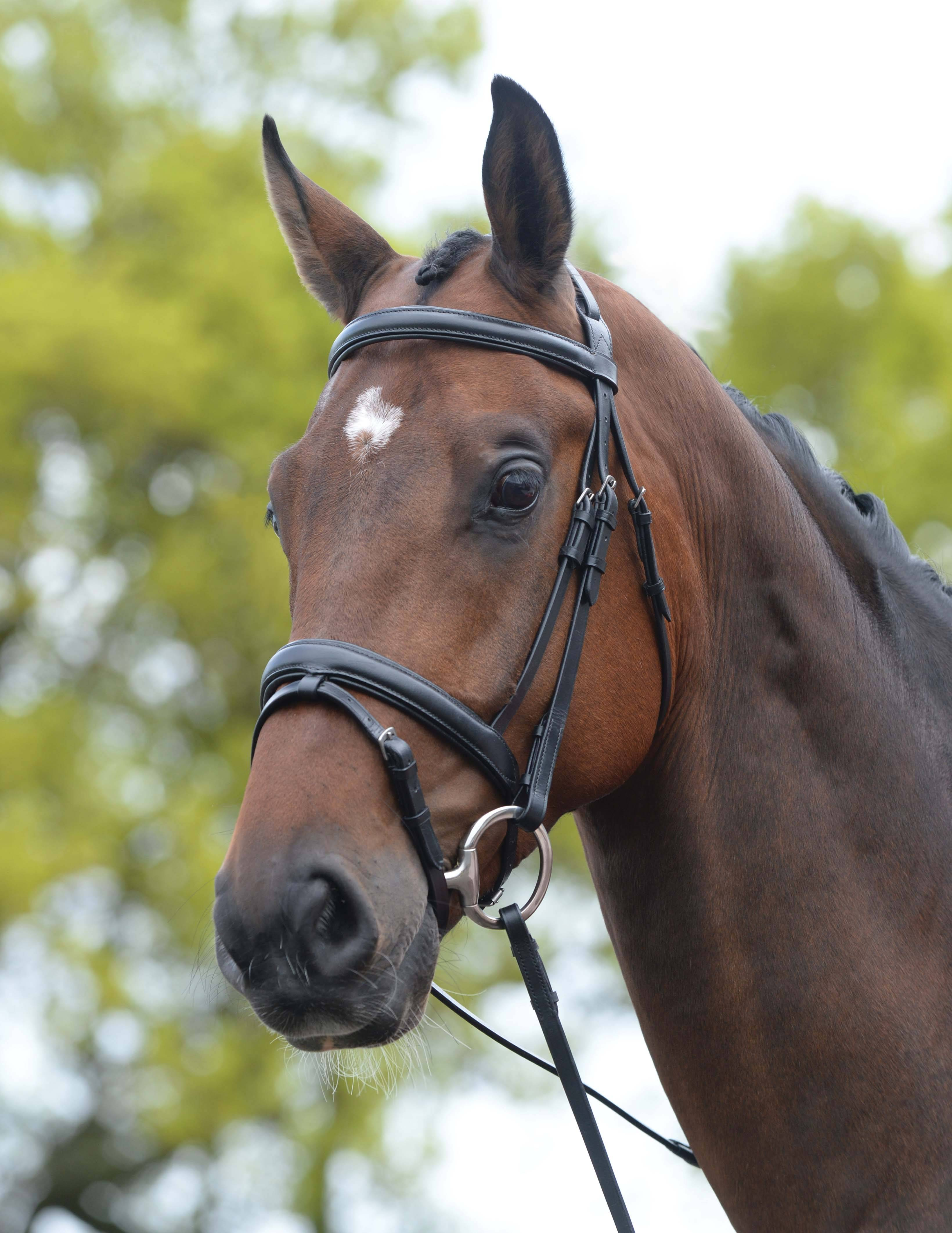 COB OR FULL HYCLASS DELUXE PADDED HEADPIECE FLASH BRIDLE FOR HORSES PONY