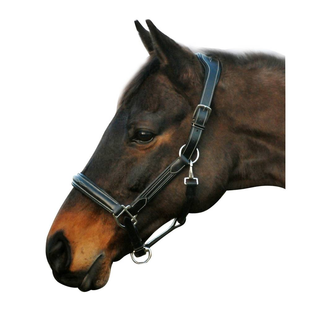 Henri De Rivel Fancy Stress Free Halter with Fancy Contrast Stitching