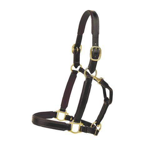 "TORY LEATHER 1"" Padded Halter with Brass Hardware"