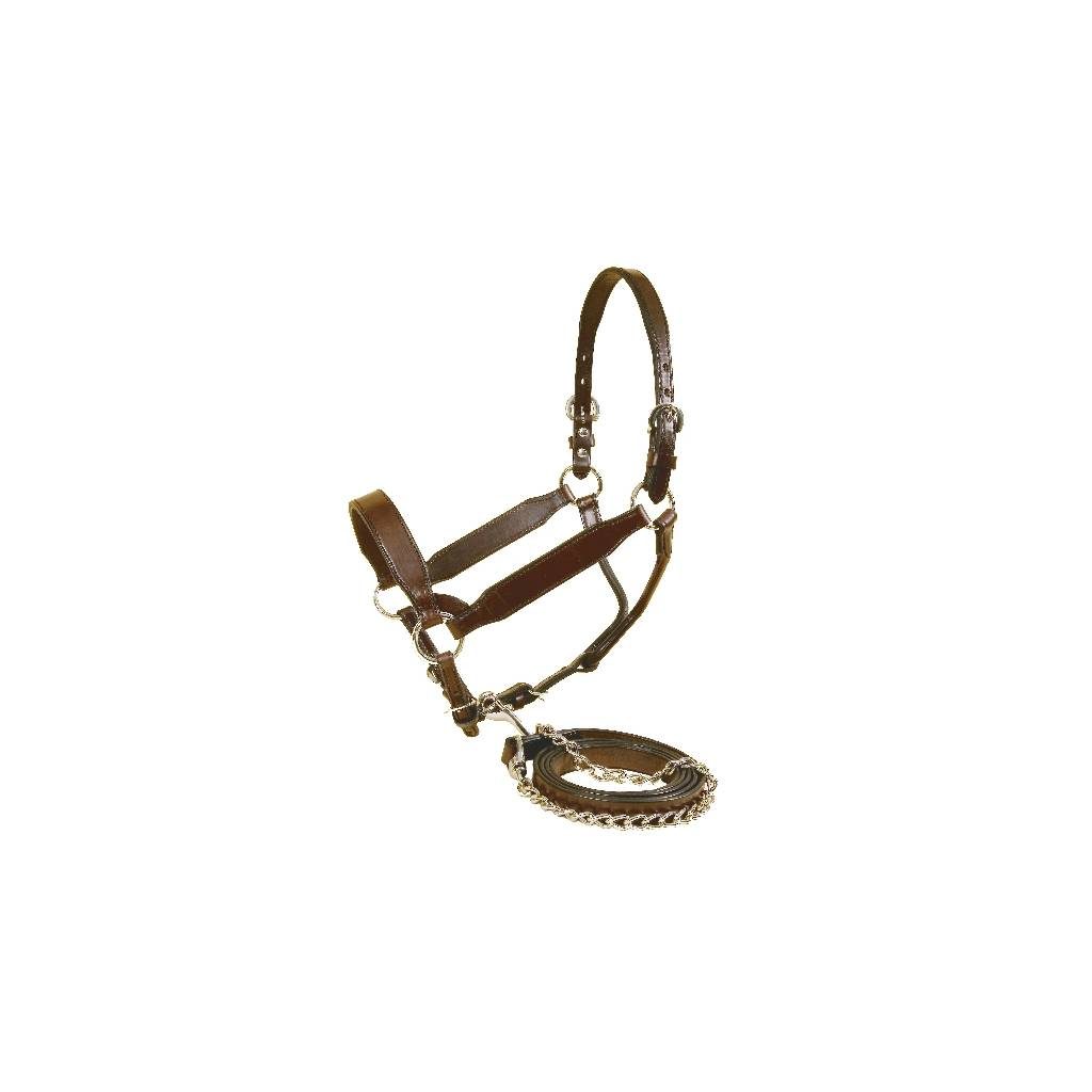 Tory Leather Congress Style Show Halter with matching Lead