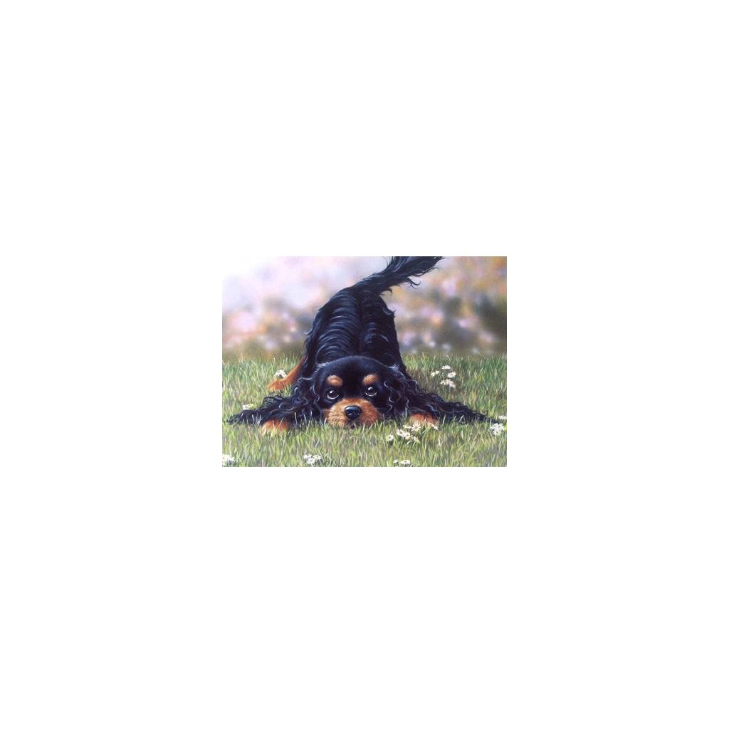 Come and Play (Gordon Setter) Blank Greeting Cards - 6 Pack