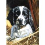 Black and White (English Springer) Blank Greeting Cards - 6 Pack