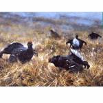 Black Game (Capercaille Grouse) Blank Greeting Cards - 6 Pack