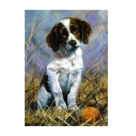 Play Ball (English Springer) Blank Greeting Cards - 6 Pack