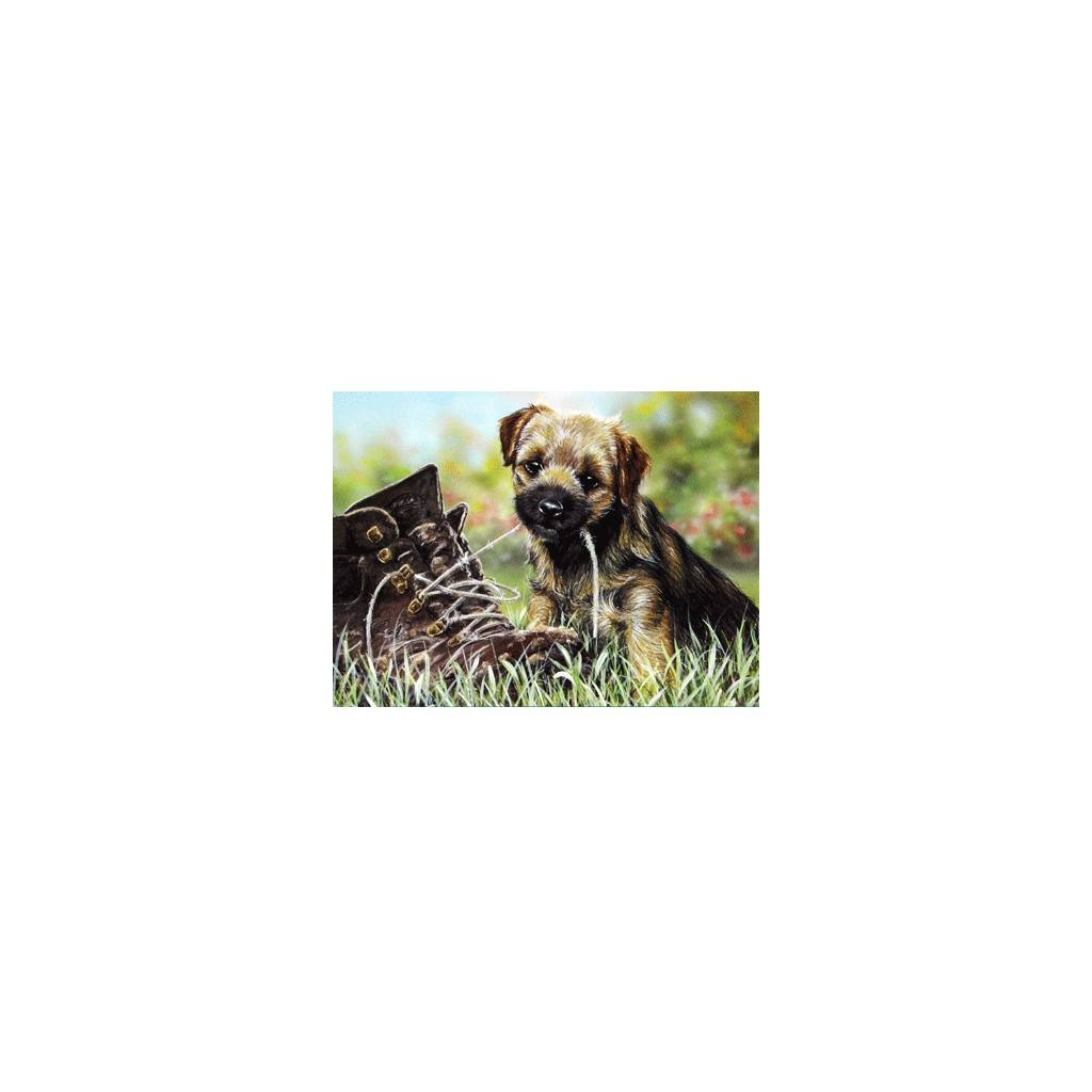 Tongue Tied (Border Terrier) Blank Greeting Cards - 6 Pack