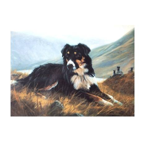Tri Color Collie (Border Collie) Blank Greeting Cards - 6 Pack