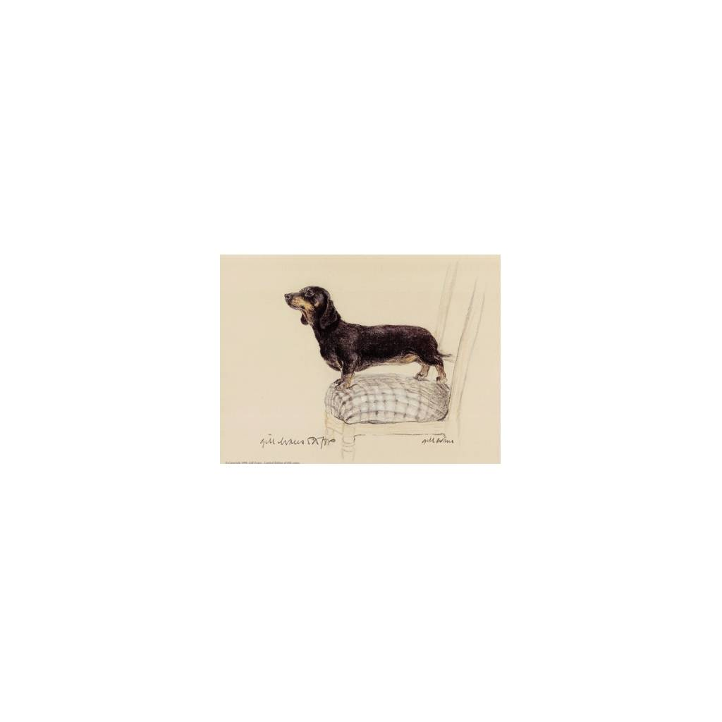 Smooth Dachshund By: Gill Evans, Matted