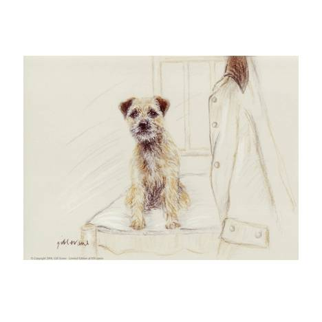 Border Terrier By: Gill Evans, Matted