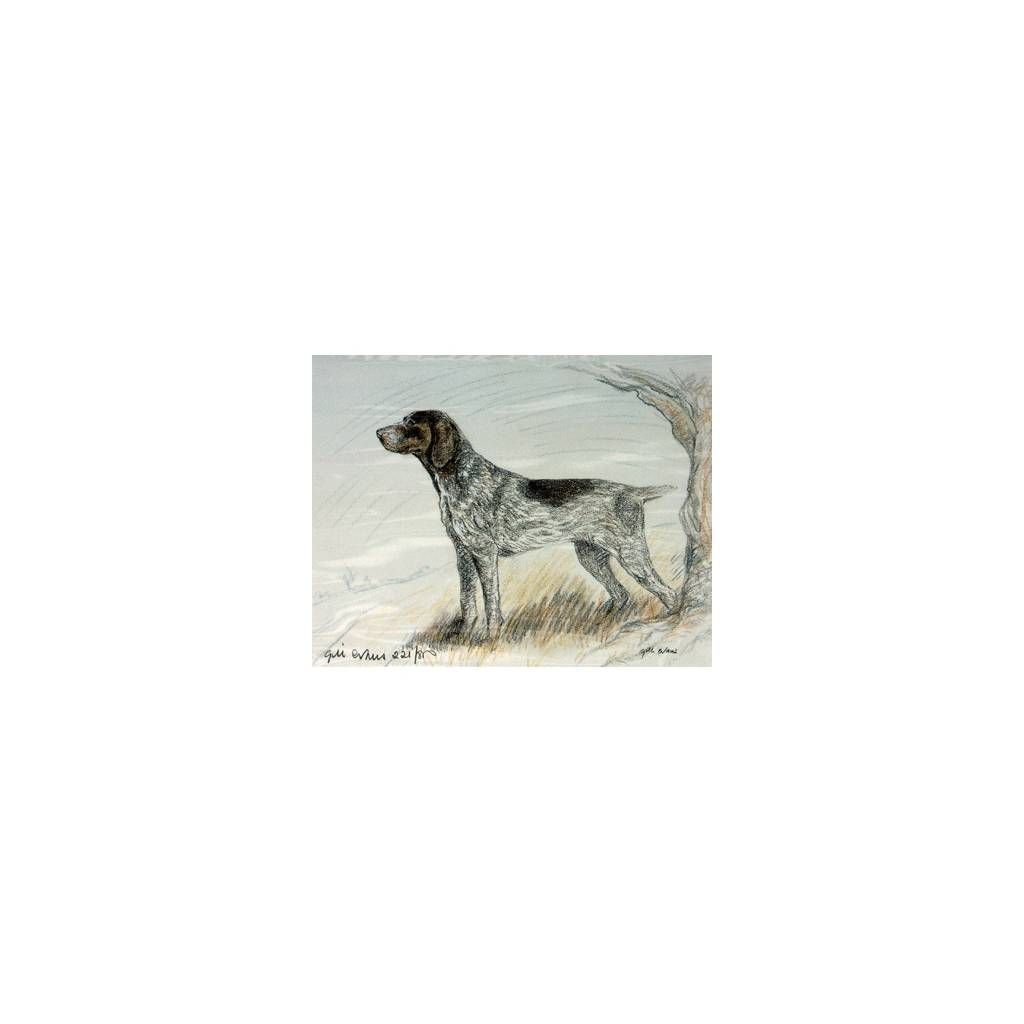 German Shorthair Pointer By: Gill Evans, Matted