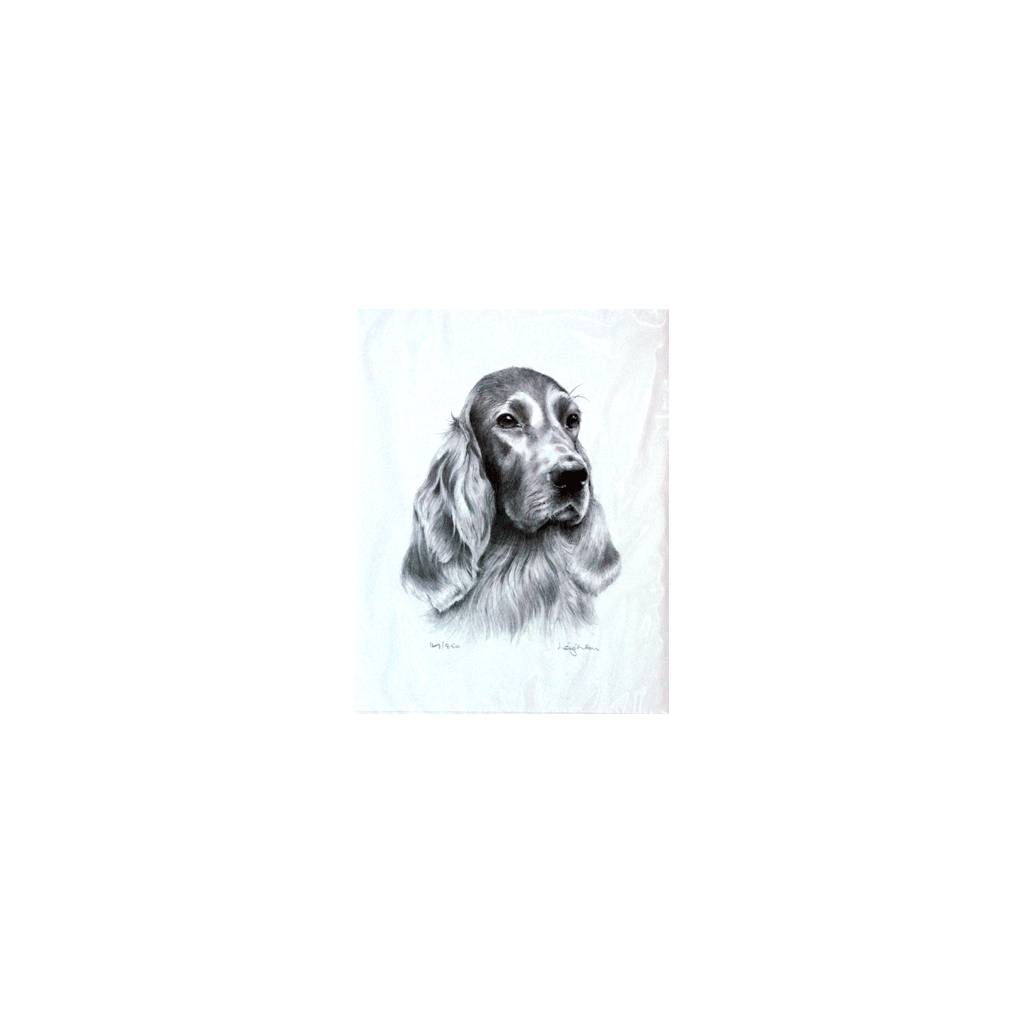 Irish Setter By: Sandra Leighton, Matted