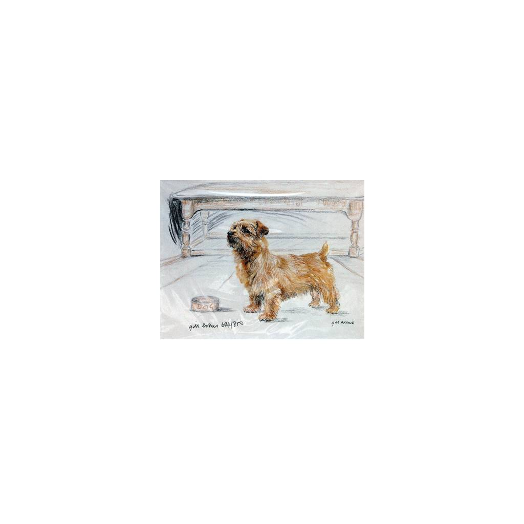 Norfolk Terrier By: Gill Evans, Matted