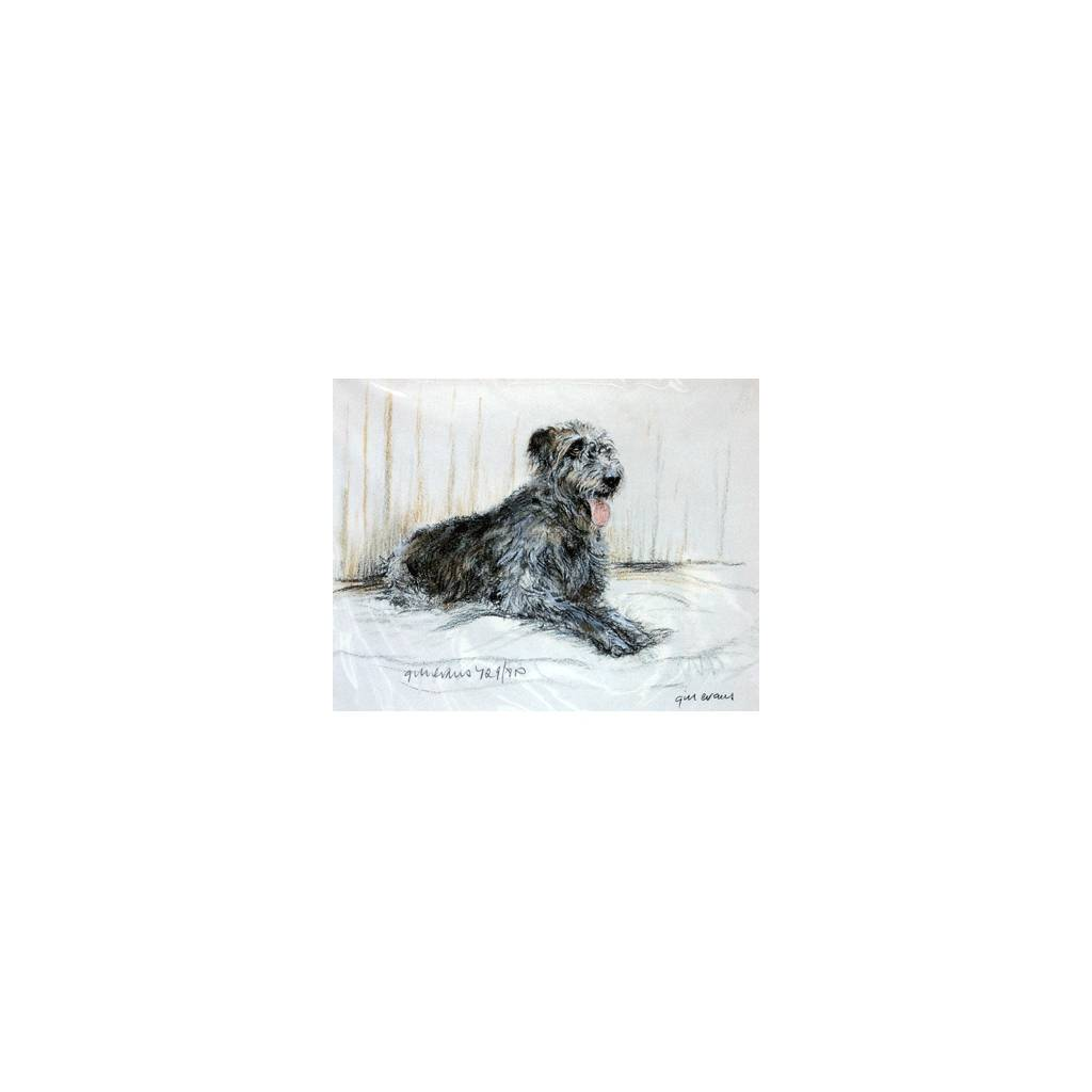 Irish Wolfhound By: Gill Evans, Matted