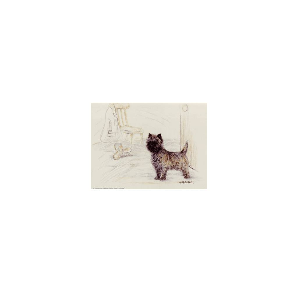 Cairn Terrier By: Gill Evans, Matted