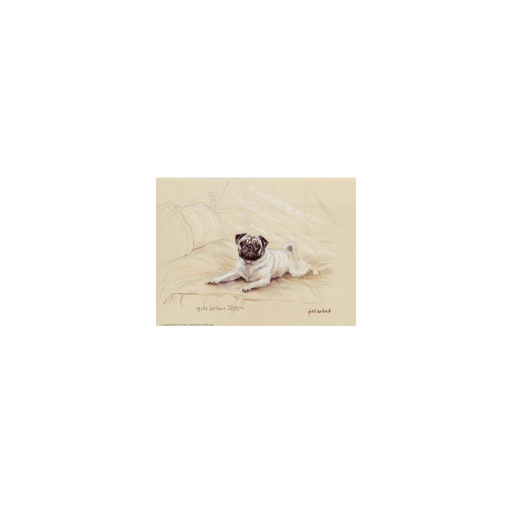 Pug By: Gill Evans, Matted