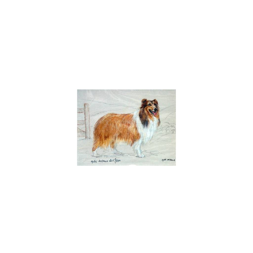 Rough Collie By: Gill Evans, Matted