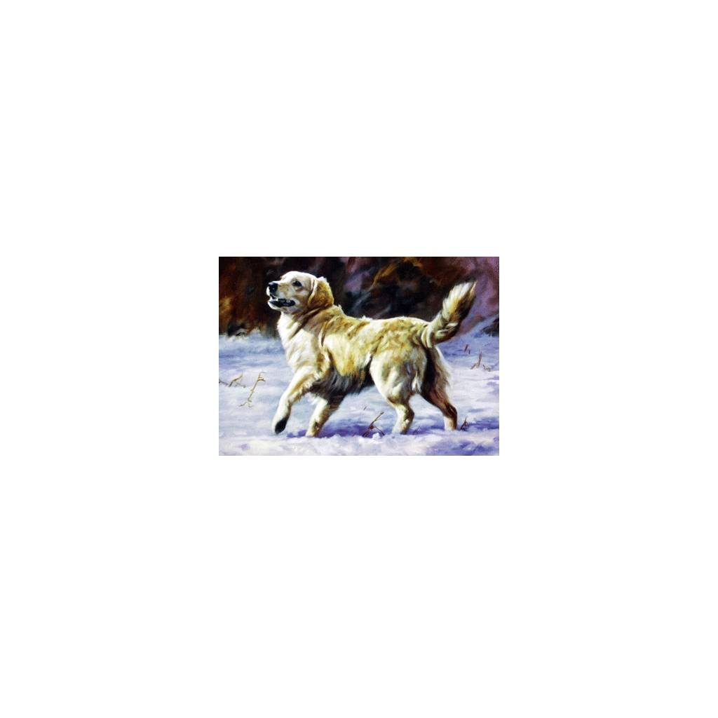 Come On (Golden Retriever) Blank Greeting Cards - 6 Pack