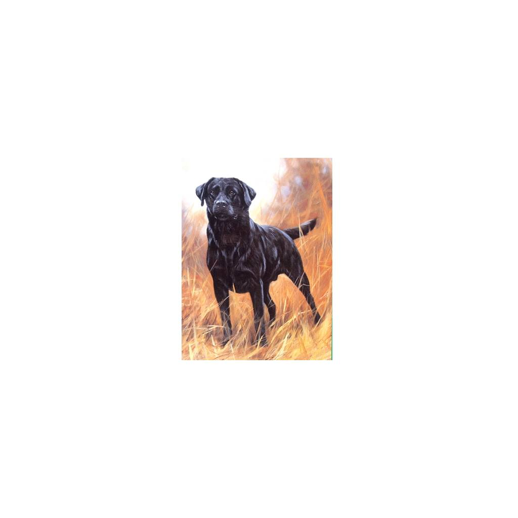 Ready for Anything (Labrador Retriever) Blank Greeting Cards - 6 Pack