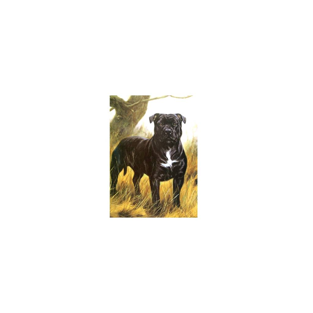 The Tough Guy (Staffordshire Terrier) Blank Greeting Cards - 6 Pack