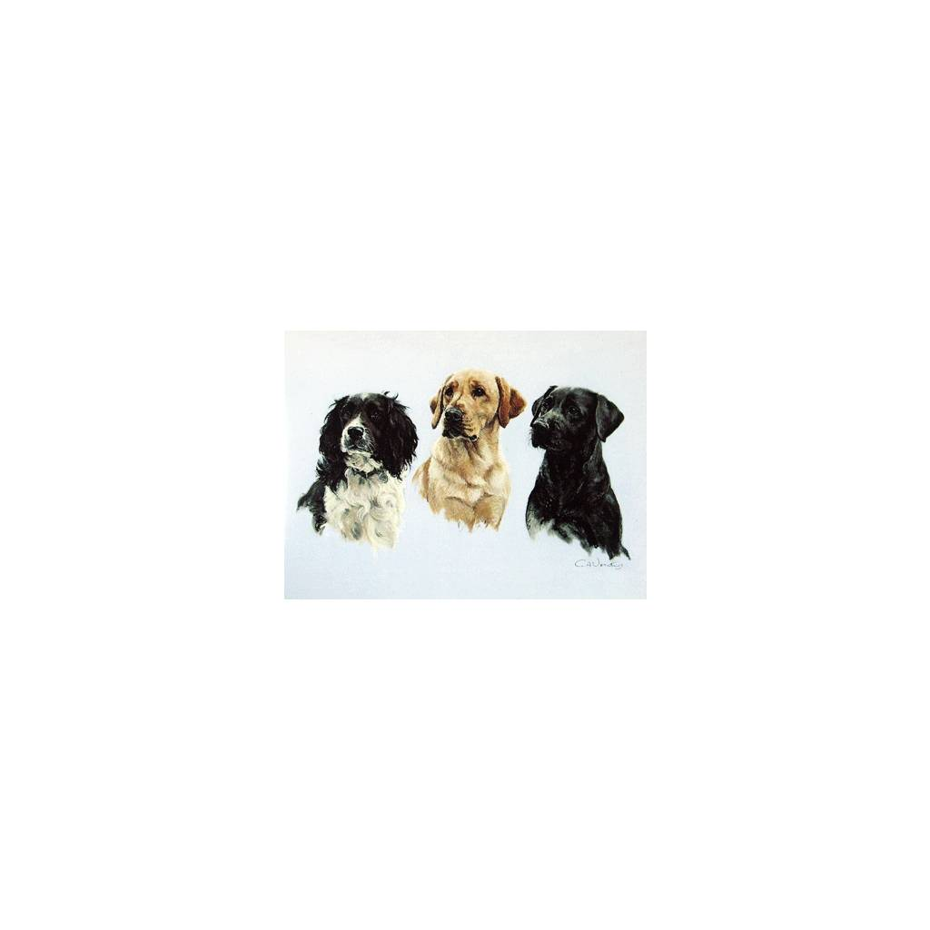 Three Wise Men (Labradors and Springer) Blank Greeting Cards - 6 Pack