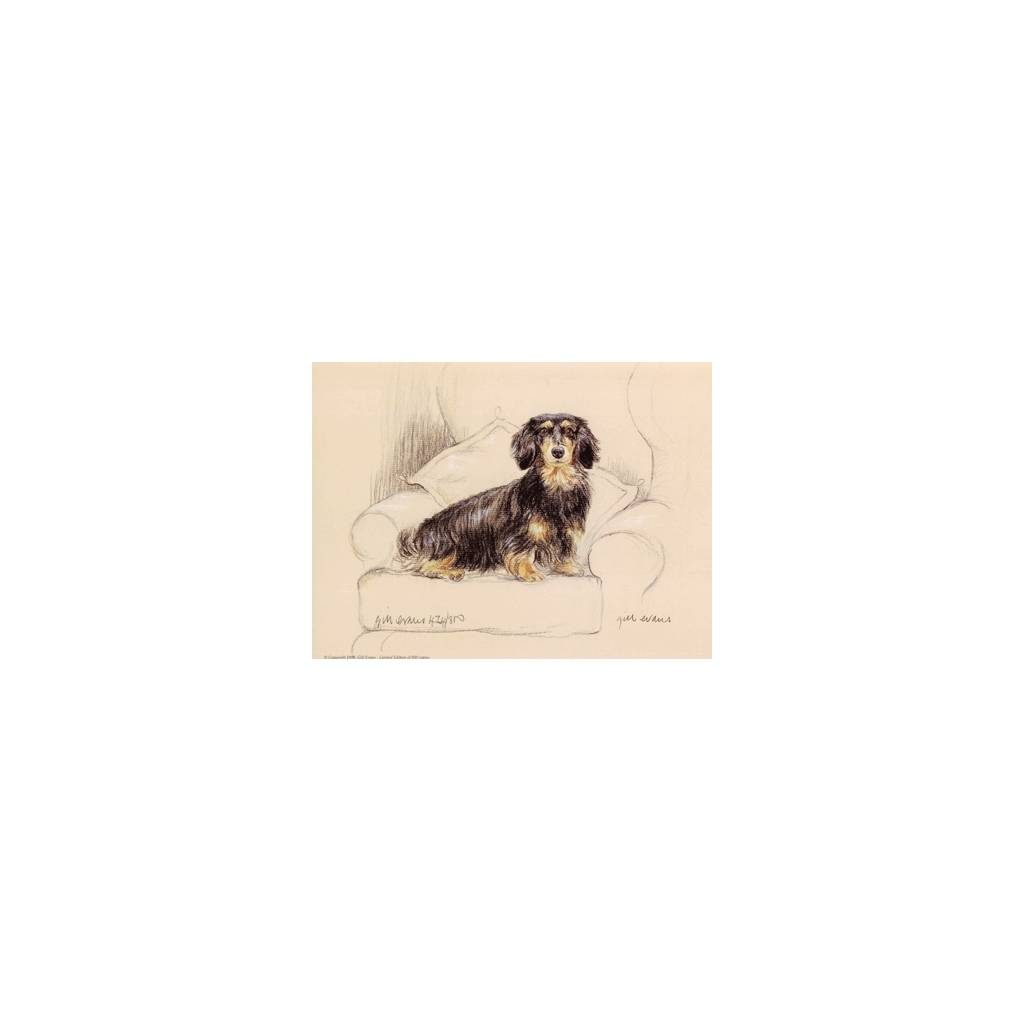 Long Haired Dachshund By: Gill Evans, Matted