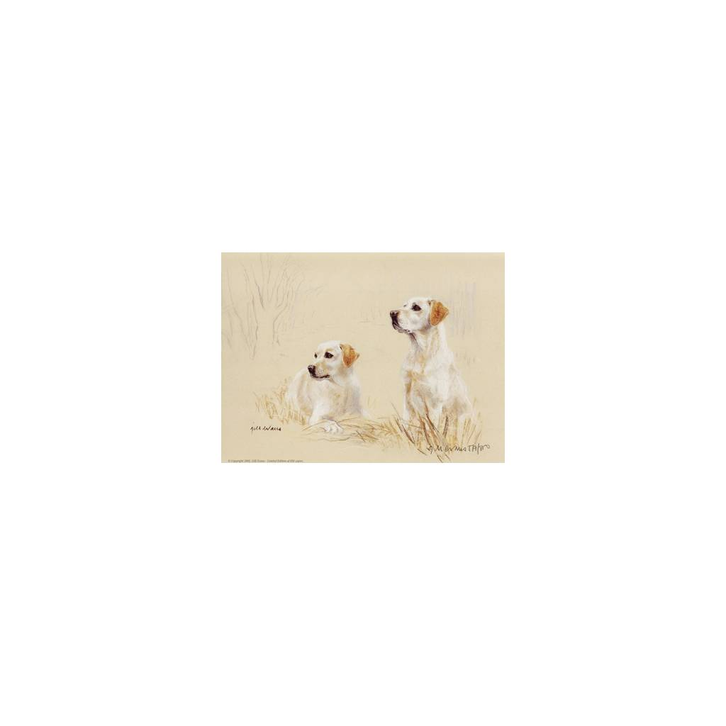 Yellow Labs By: Gill Evans, Matted